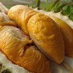 durian-duren-foto-ig-durianstore
